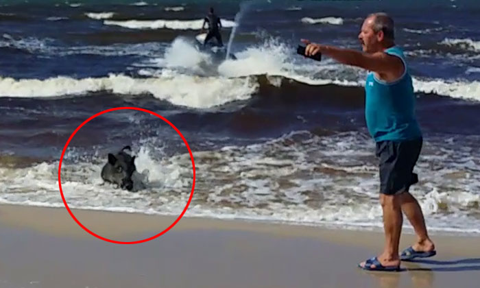 Beach-goers in Poland shocked after this suddenly charges out of the water