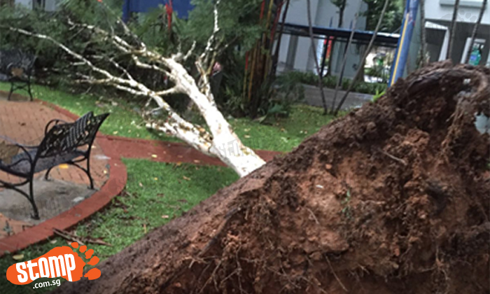 Tree uprooted after heavy rain and strong winds at Rivervale Drive