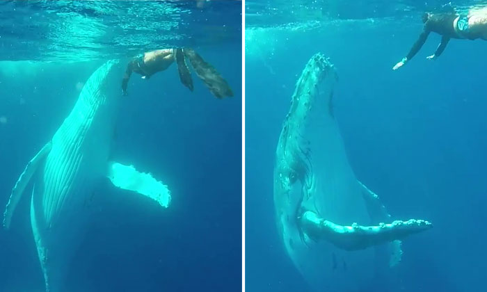 The most amazing thing happens after diver comes across huge whale in Australia