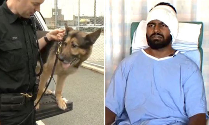 Singaporean gets ear bitten off by police dog chase in Canada