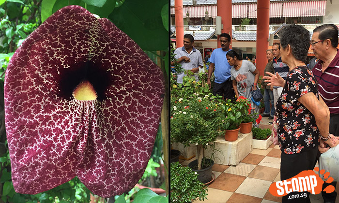 Do you know what this is? Strange cloth-like plant attracts large crowd at Woodlands shop