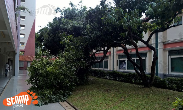 Tree falls at Fajar Road due to heavy rain