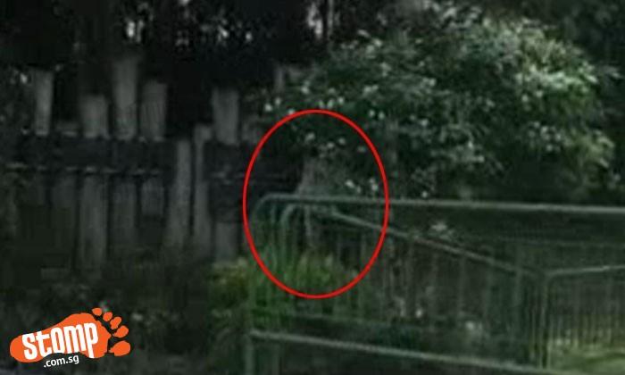 Monkey spotted at Yishun Park near SAFRA