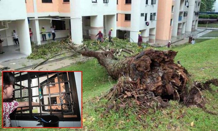8-storey tall tree falls and damages gas pipes at Holland Close; about 70 households affected