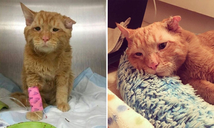 Sad-looking kitty finds home -- read his heartwarming story
