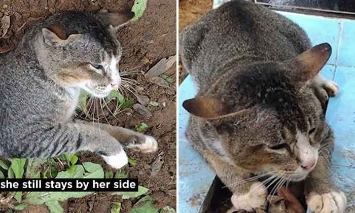 Cat stays loyal by staying at owner's grave two years after owner died