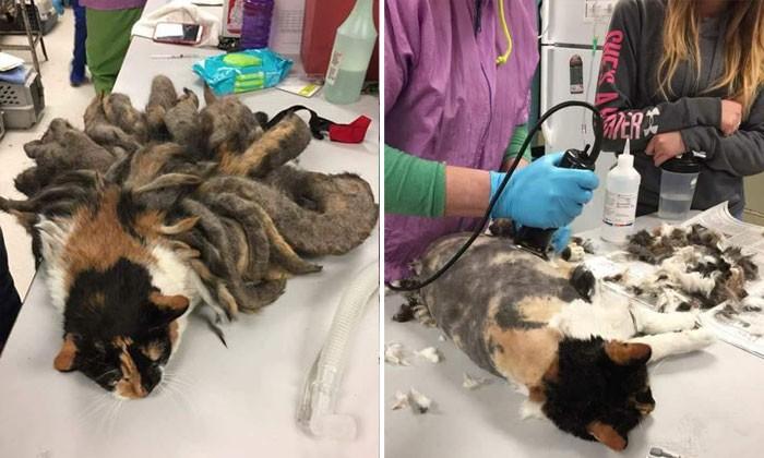 Cat found with dreadlocks on her body -- got heavy burden shaved off