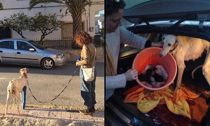 Photo: Facebook/Clinivet Turre Clinica Veterinaria
