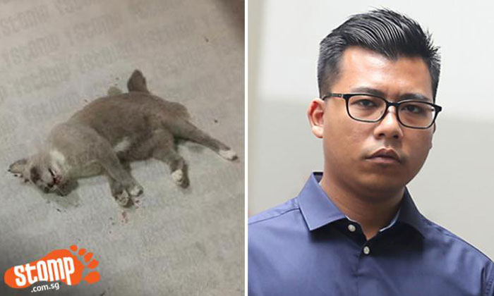 Left: Cat that was found dead at foot of Tampines block. Right: Fajar Ashraf Fajar Ali who was jailed for 18 weeks on two counts of animal cruelty. Photos: Stomp, ST