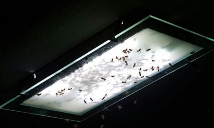 A swarm of bees flew into Ms Kavita's living room.PHOTO: COURTESY OF KAVITA