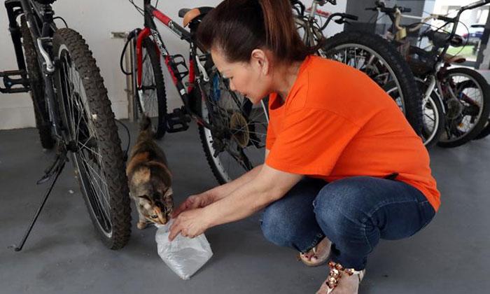 Ms Chen feeding a stray. Photo: Lianhe Wanbao