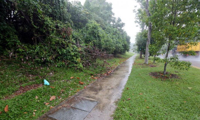 The victim was dragged a nearby forested area between the Singapore Turf Club and Kranji War Memorial, where she was raped. PHOTO: LIANHE WANBAO