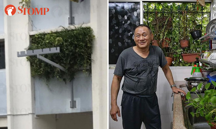 Mr Victor Lee and thedense foliage growing out of his living room window.PHOTOS: STOMP,KEVIN LIM/TNP