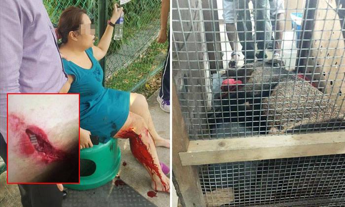 Punggol wild boar attack: Pregnant victim recounts her