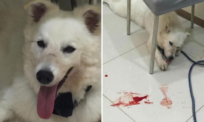Owner Gets Plastic Surgery After Pet Dog Bites Her On Face