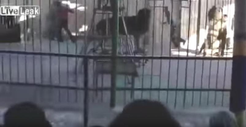 Terrifying video shows lion killing circus worker during