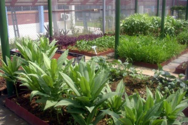 here u0026 39 s how you can transform your hdb corridor into a flourishing garden