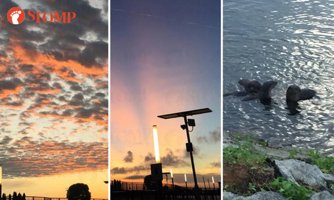 Stunning sunrise, cool cloud formations and cute otters spotted by Yishun resident