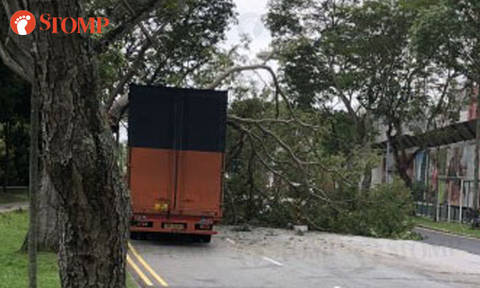 Tree branch falls after being struck by lightning and hit by truck in Clementi