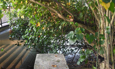 Man's body found floating among mangrove trees in Changi