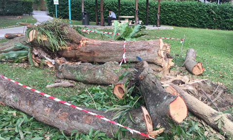 Resident stumped to see trees cut down in Bukit Timah -- but they had to be removed for safety