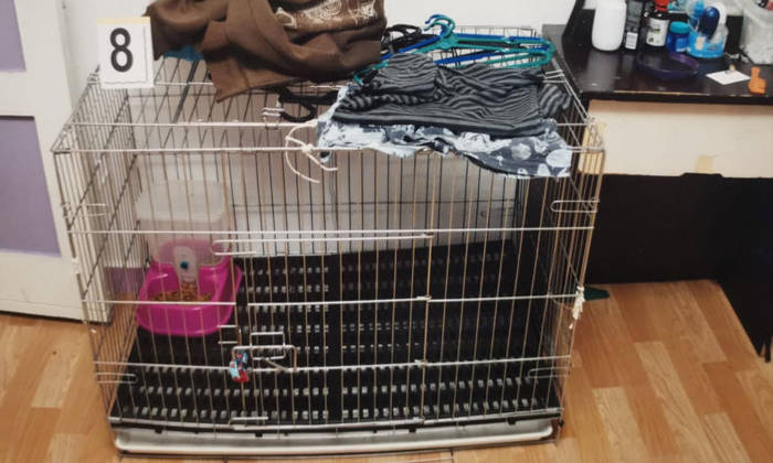 Dr Chan Shijia, who had examined the cage measuring 91cm long, 58cm wide and 70cm tall, said it was possible for someone who was confined inside to get scratched by the metallic bars while moving about. Photo: Court documents
