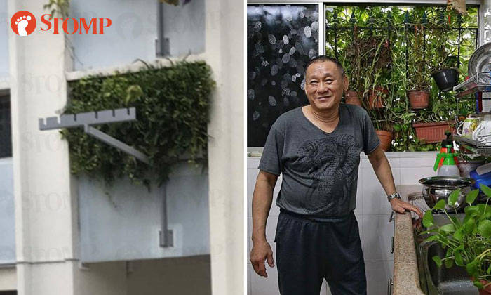 Mr Victor Lee and the dense foliage growing out of his living room window. PHOTOS: STOMP, KEVIN LIM/TNP