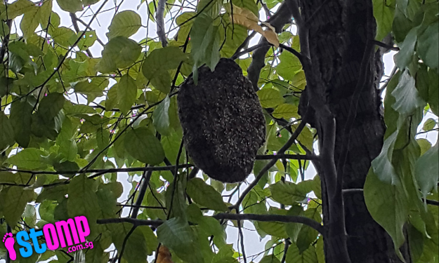Huge beehive at Tampines Avenue 4 threatens to drop from tree on windy New Year's Day