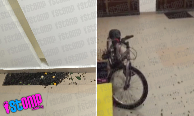 Swarm of bees invade Bedok Central block and terrifies residents