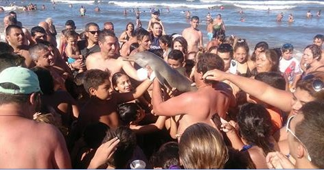 Endangered baby dolphin dies after Argentine beach-goers pass it around for selfies