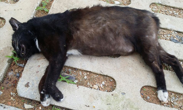 Dead cat found with blood in its mouth at Yishun Block 244