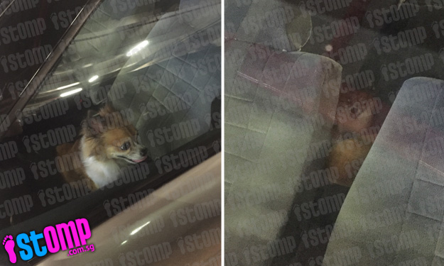 Cruel owner leaves dog in parked car at Vivocity carpark with no ventilation for over an hour