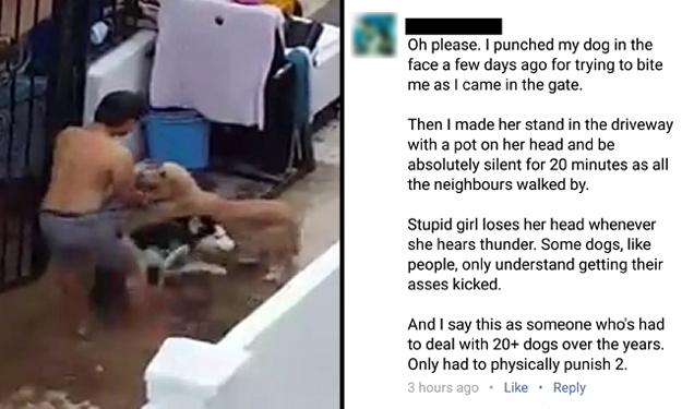 Netizen responds to Loyang Green abuse case: 'I punched my dog in the face and punished her too'